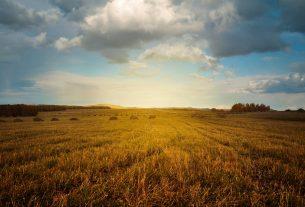 Hale namiotowe: nowoczesne obiekty dla rolnictwa